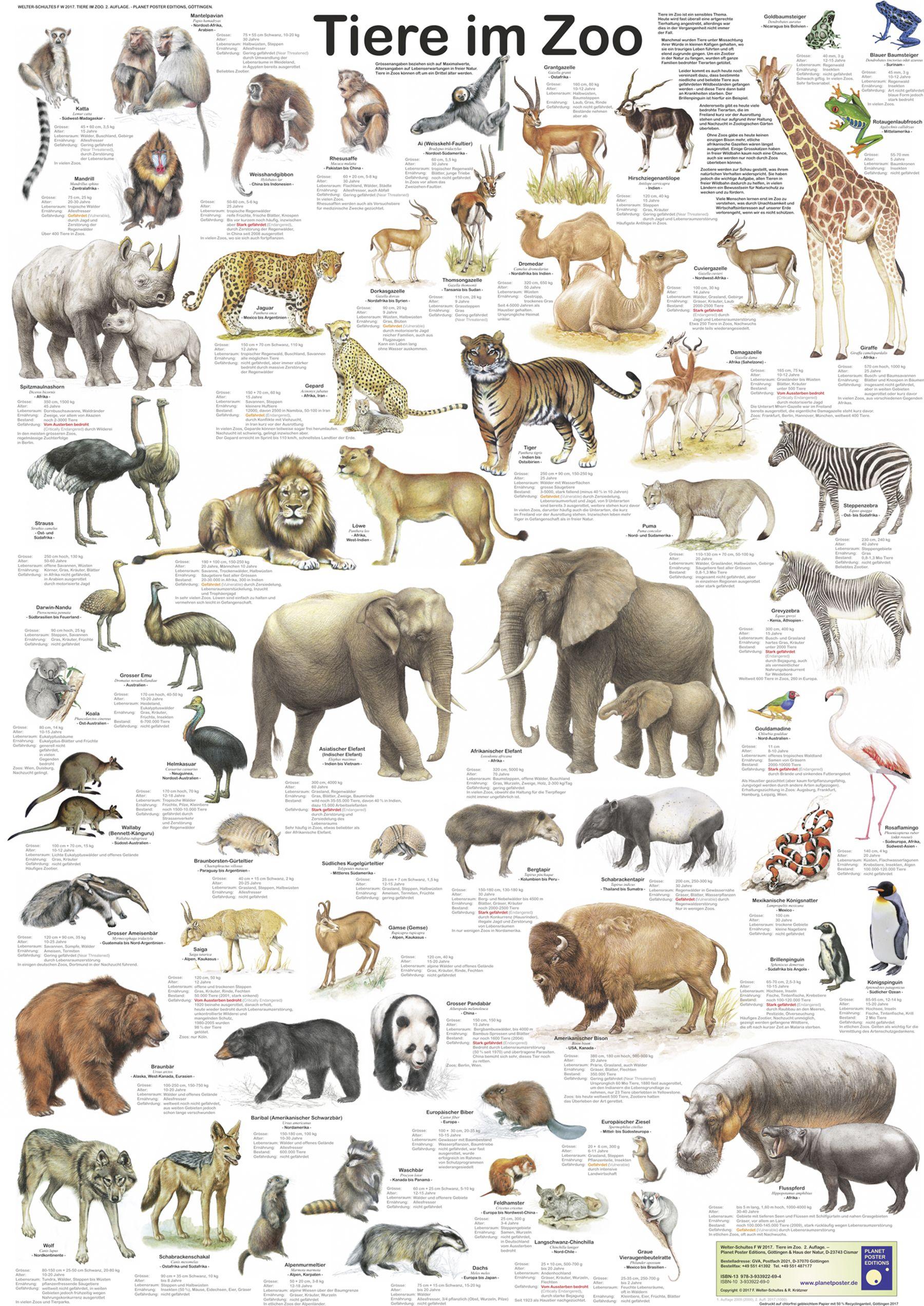 Tiere Im Zoo Poster Deutsch Din A1 In 2020 Tiere Saugetiere Grosskatze