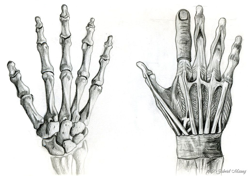 Bildresultat Fr Hands Anatomy Lartiste Pinterest Hand