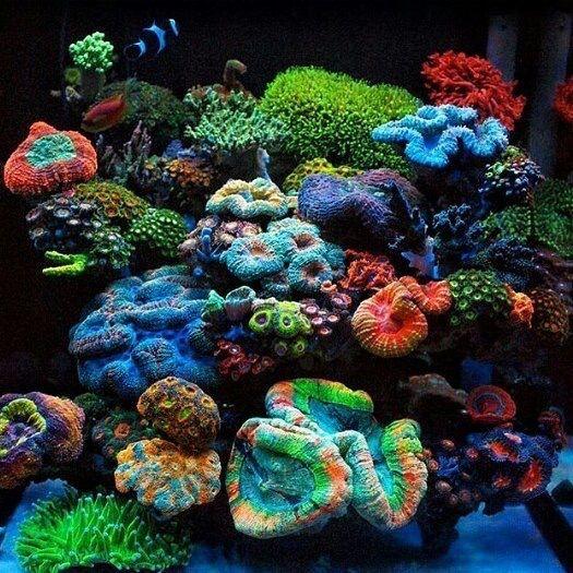 Saltwater Aquarium Aquascape: Coloridos #Aquariums