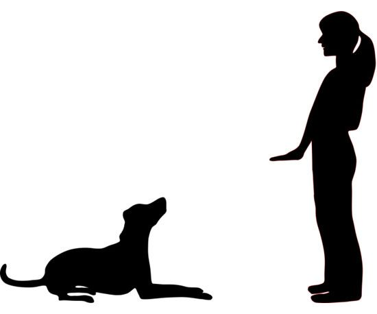 Hands On Training 5 Signals To Teach Your Dog Dog Sign Language