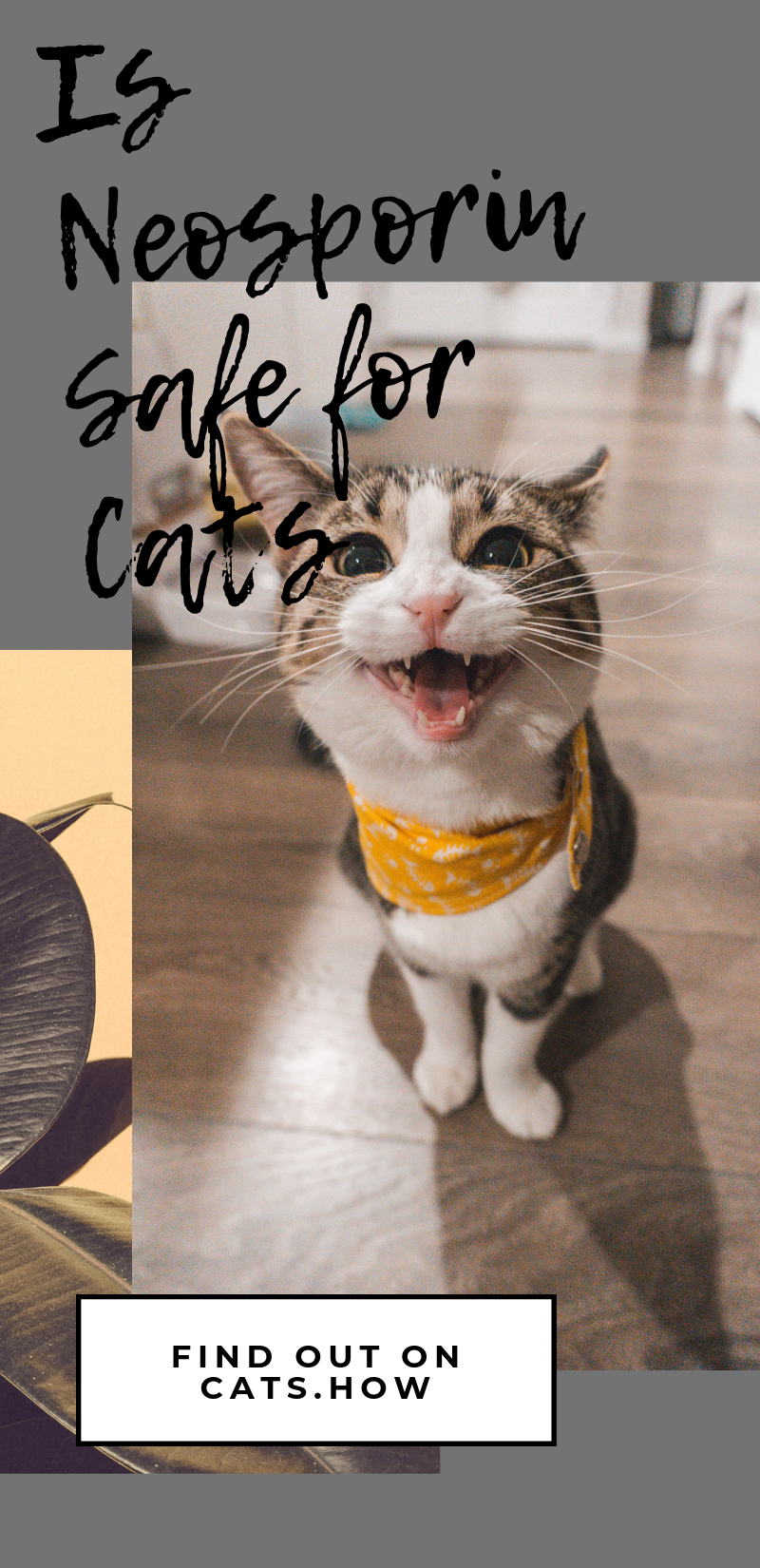 Pin On Healthy Cat Cat Care Tips
