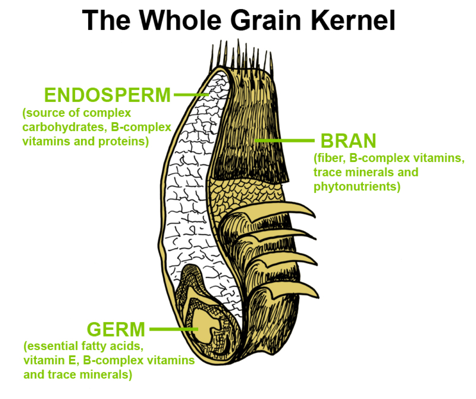 hight resolution of the whole grain kernel
