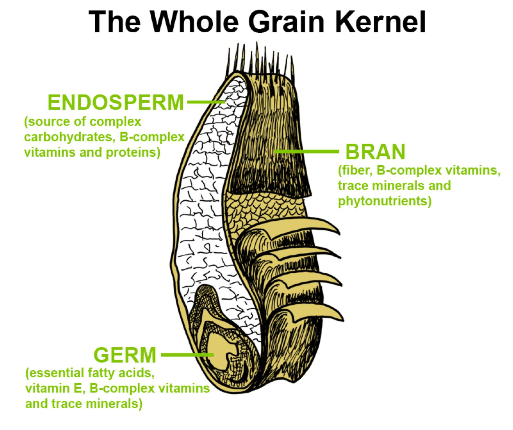 the whole grain kernel  [ 1668 x 1397 Pixel ]