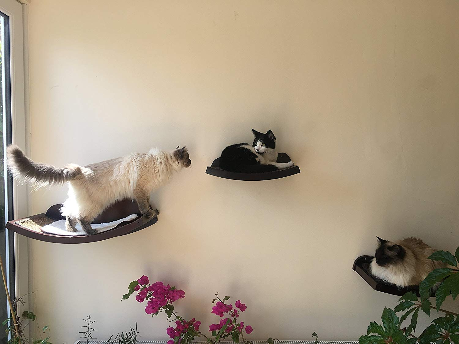 Art of Paws Cat Shelves Cat Perch Cat Bed with Curved