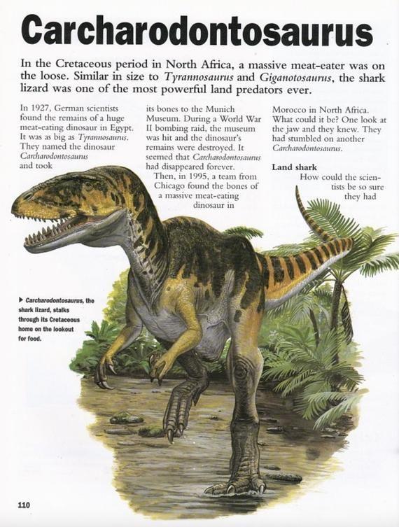 African T-Rex Tooth Carcharodontosaurus Tyrannosaurus Fossil dinosaur Jurassic