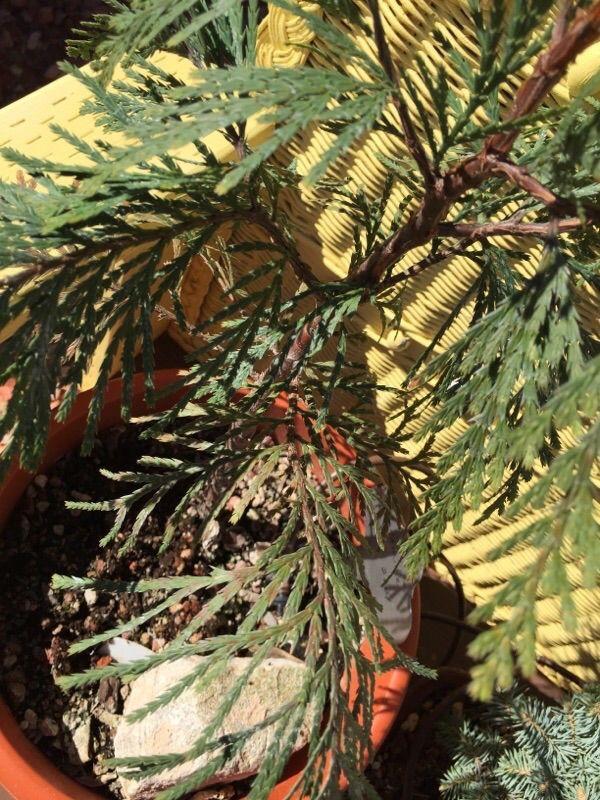 Free Plant Identification Plant leaves, Garden, Plants