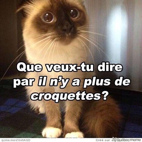 Chat adult algerie
