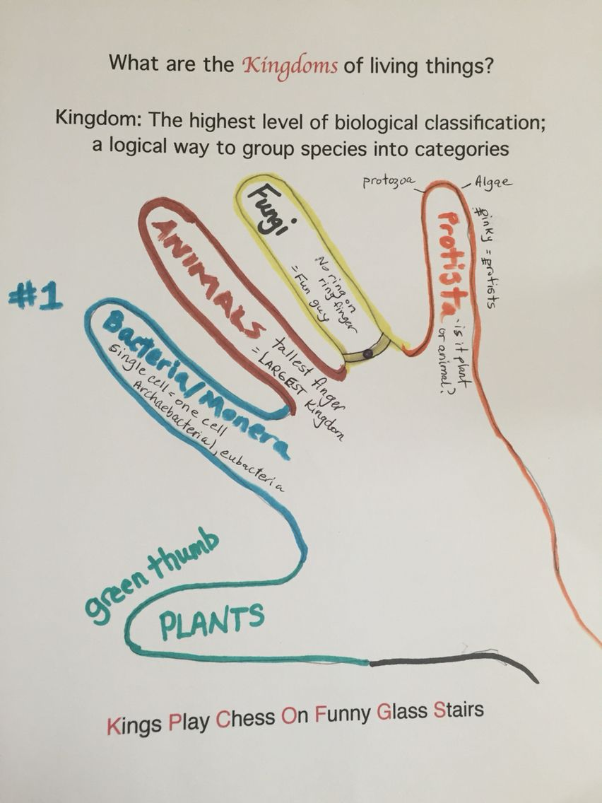 hight resolution of Science: 5 Kingdoms of Living Things   Science biology