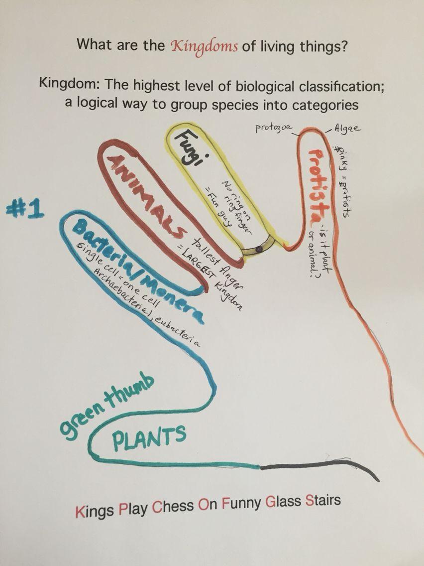 medium resolution of Science: 5 Kingdoms of Living Things   Science biology