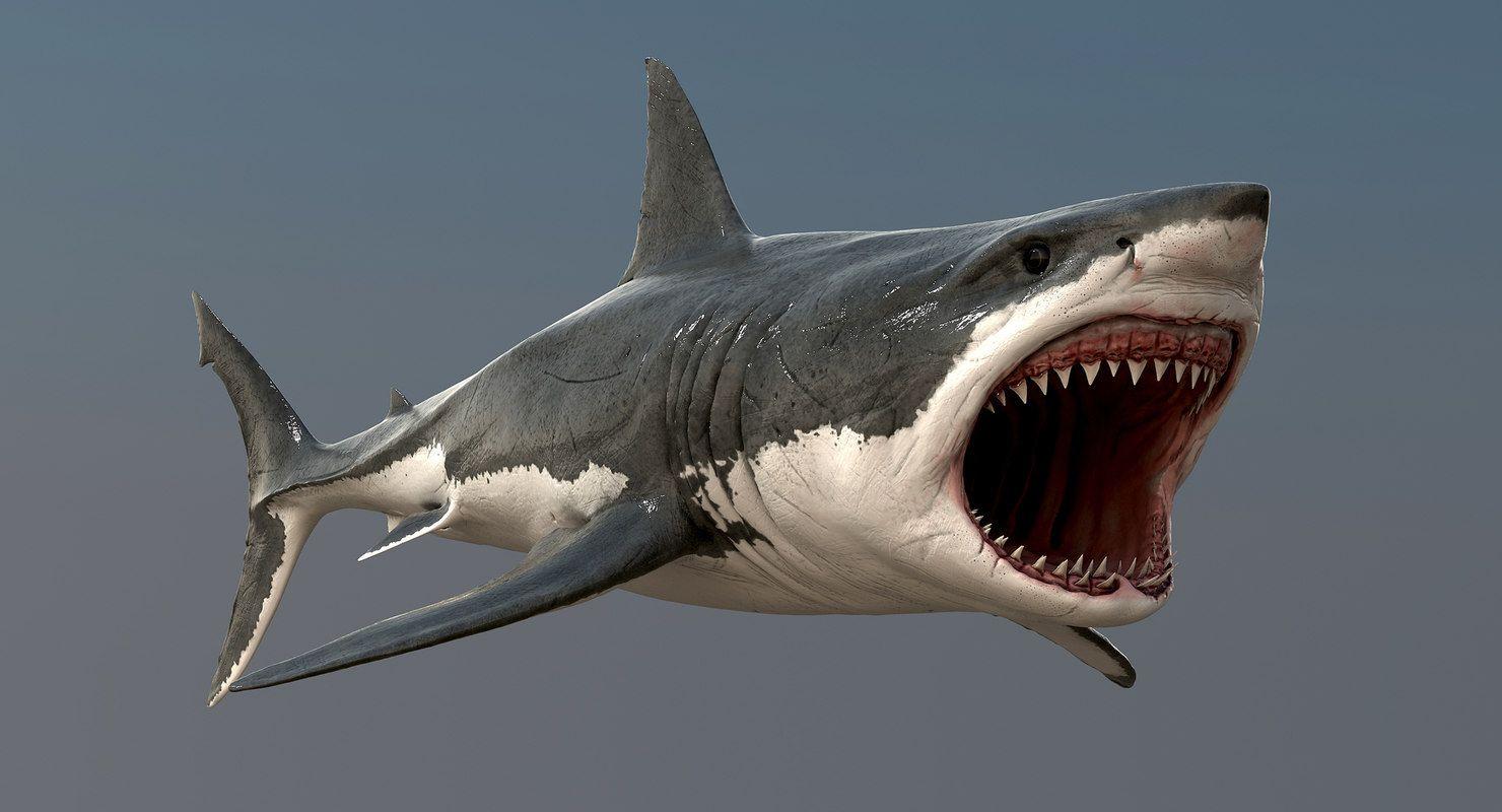 акулья пасть картинки становятся