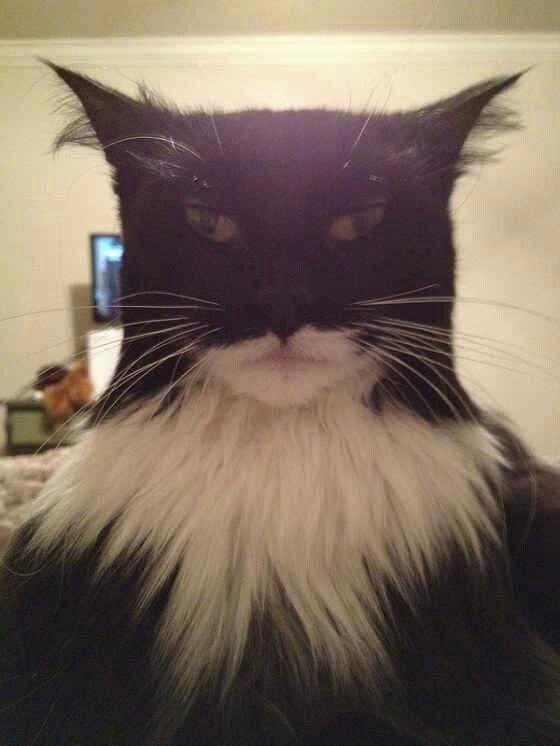 Bat Cat 9-13-15 | Cats | Funny cats, Funny animals, Animal humour
