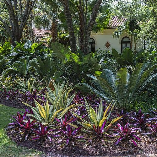 Tropical Garden Photos | Pamela Crawford | Palm Beach Landscapes