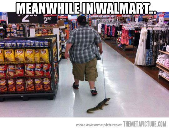 Just walking my gator…