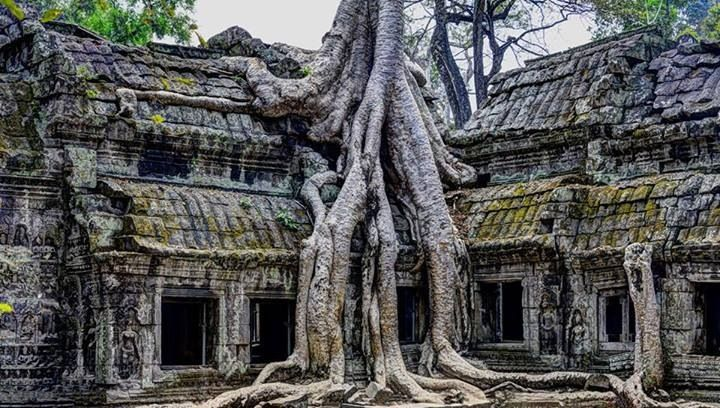 Temple of ta prohm Angkor in Cambodia