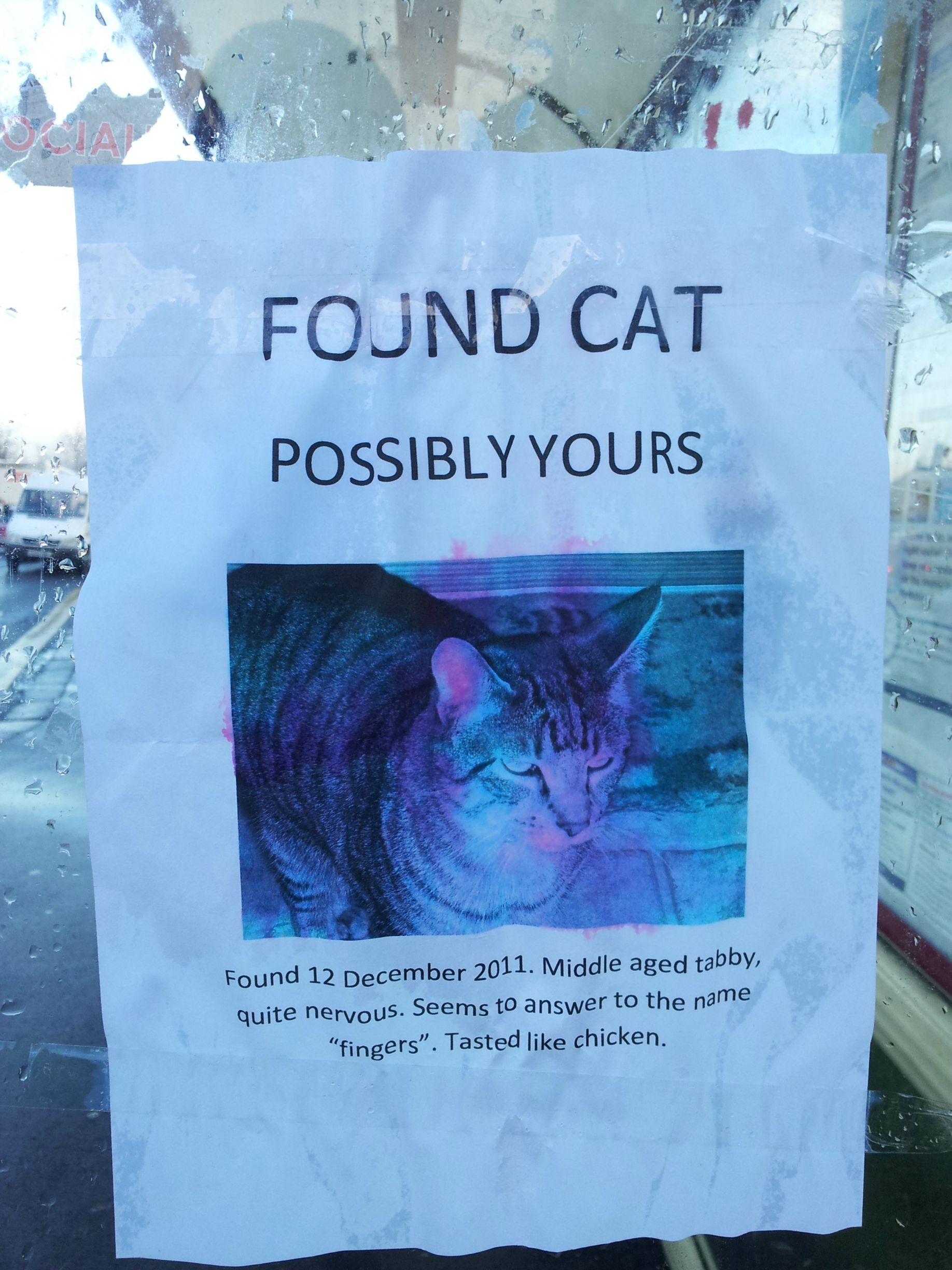funny cats cat posters