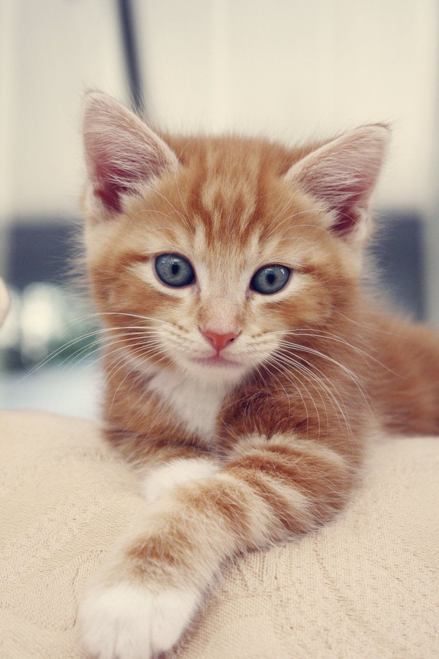 mr ginger tom. by ~phycotic-hypnotic on deviantART