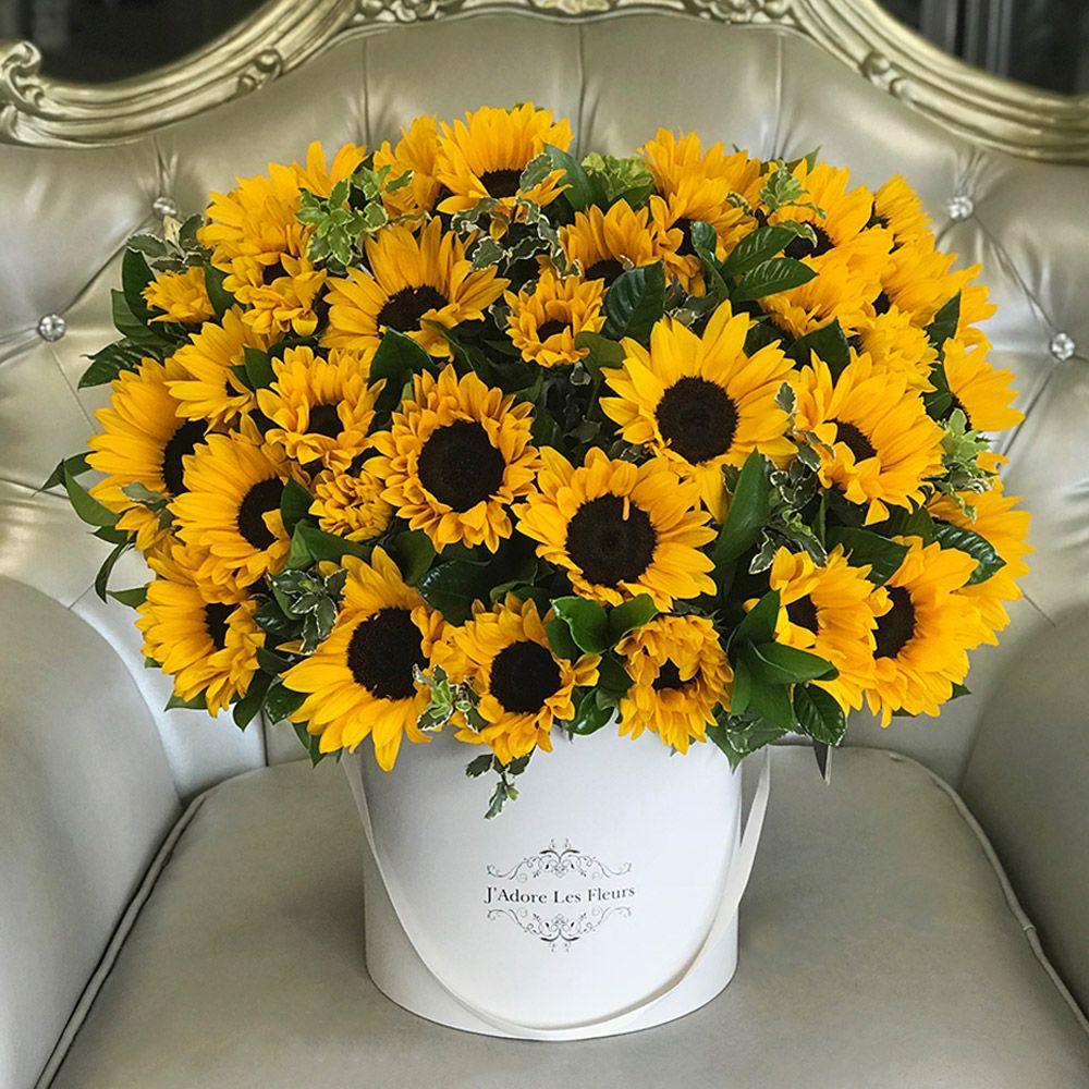 JLF Sunflower Box (con imágenes) Venta de plantas