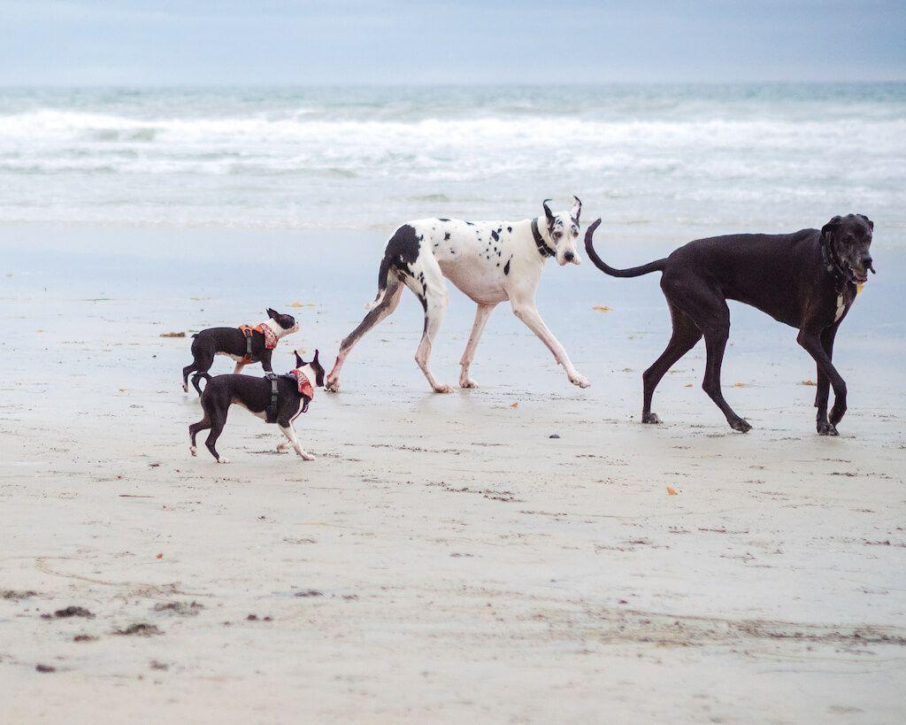 Best Dog Beaches In San Diego Dog Beach San Diego Beach Del Mar Beach