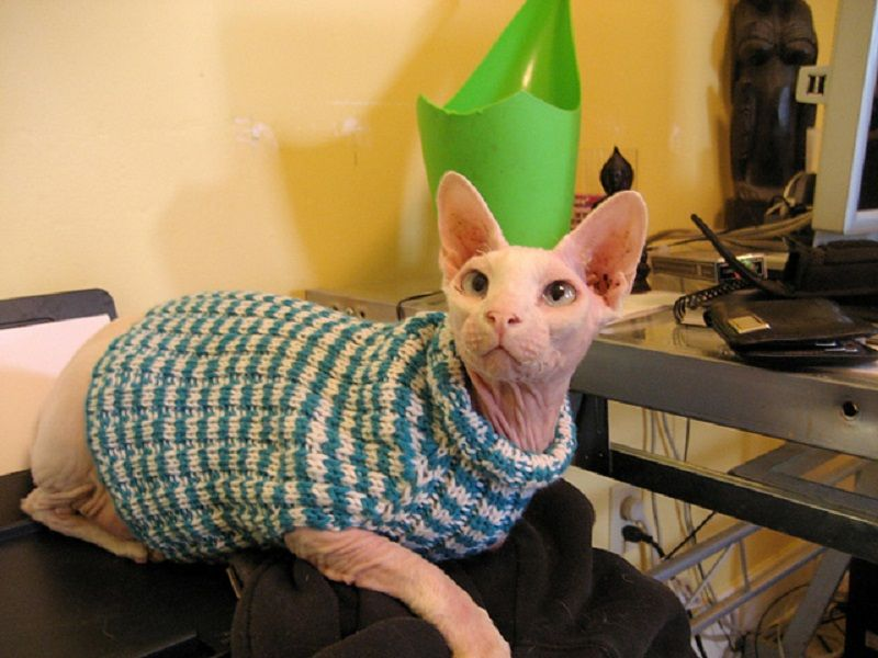 Adorable Outfits: DIY Cat Clothing For your Furry Friend