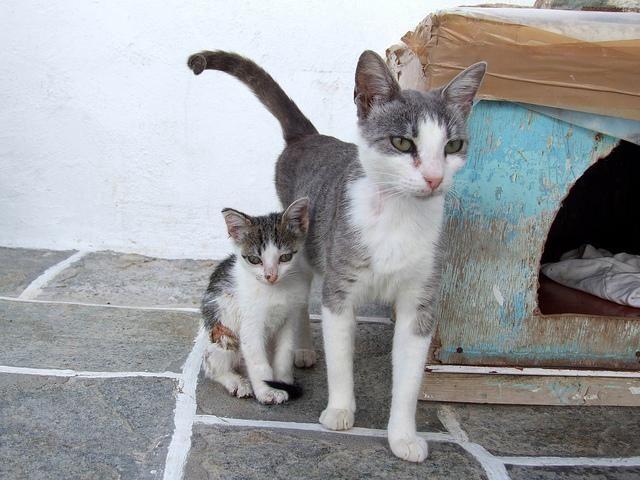 Aegean Cat Names