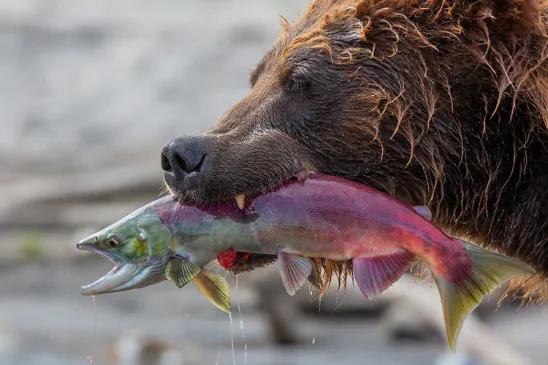 (49) Одноклассники Животные, Фотографии животных, Озера