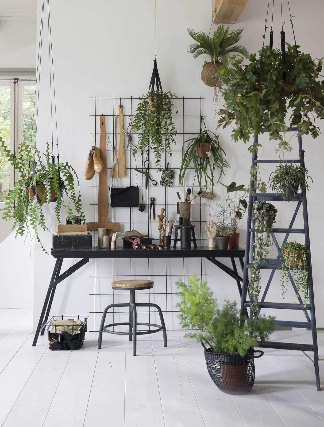 Planten zo maken planten je in en exterieur volledig on point