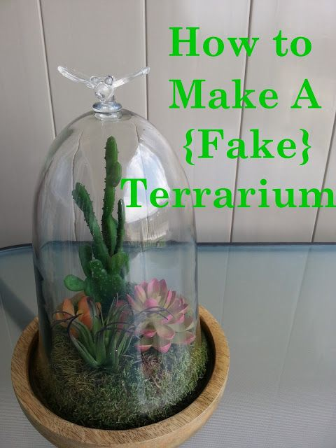 Live From B5 How To Make A Terrarium Beautiful Things