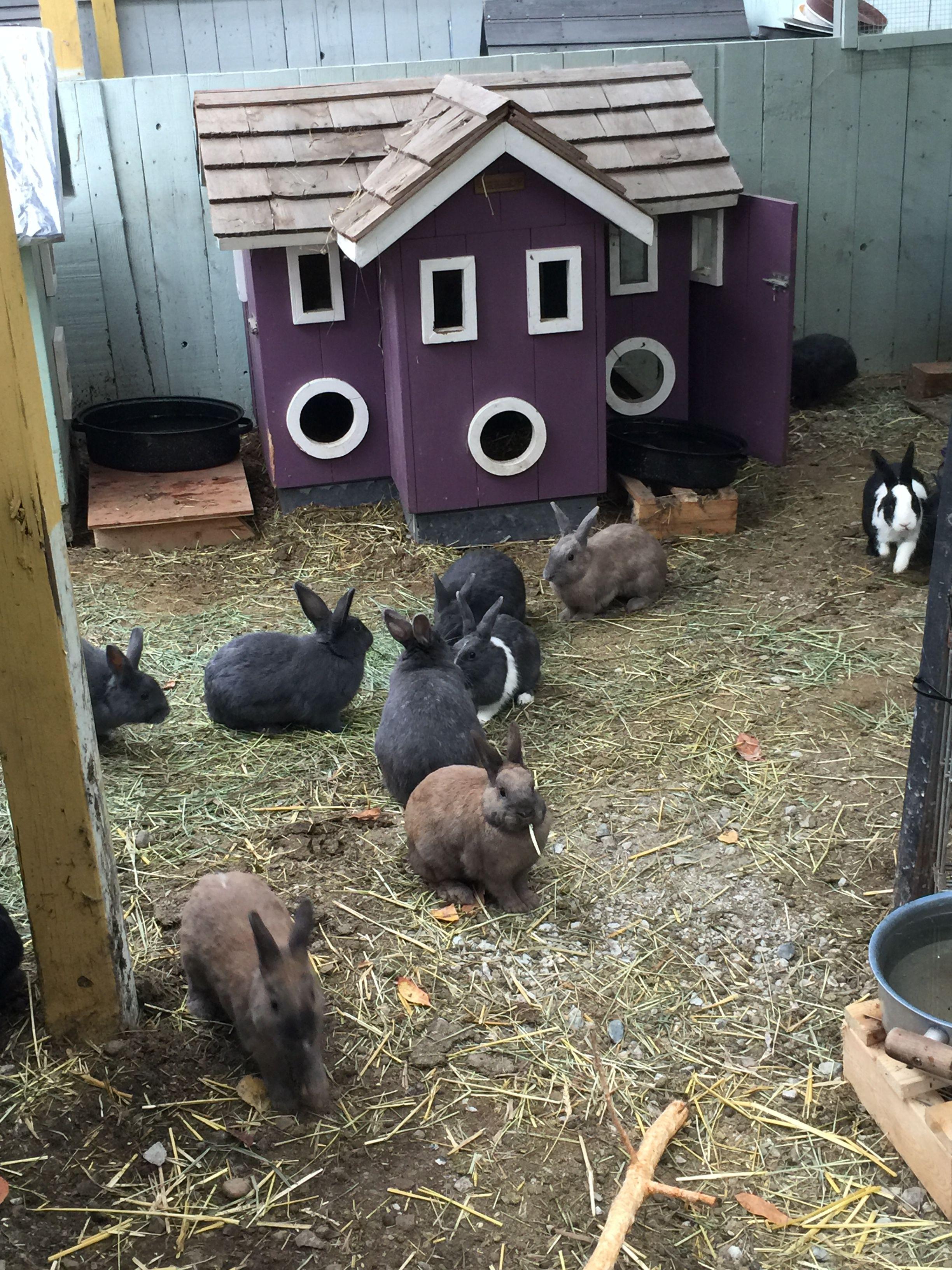 Colony Style Rabbit Sanctuary Rabbitats Rabbit Rescue Surrey Bc Up To 50 Spayed Neutered Rabbits Cohabit A Spa Pet Area Animal Sanctuary Animal Rescue Ideas