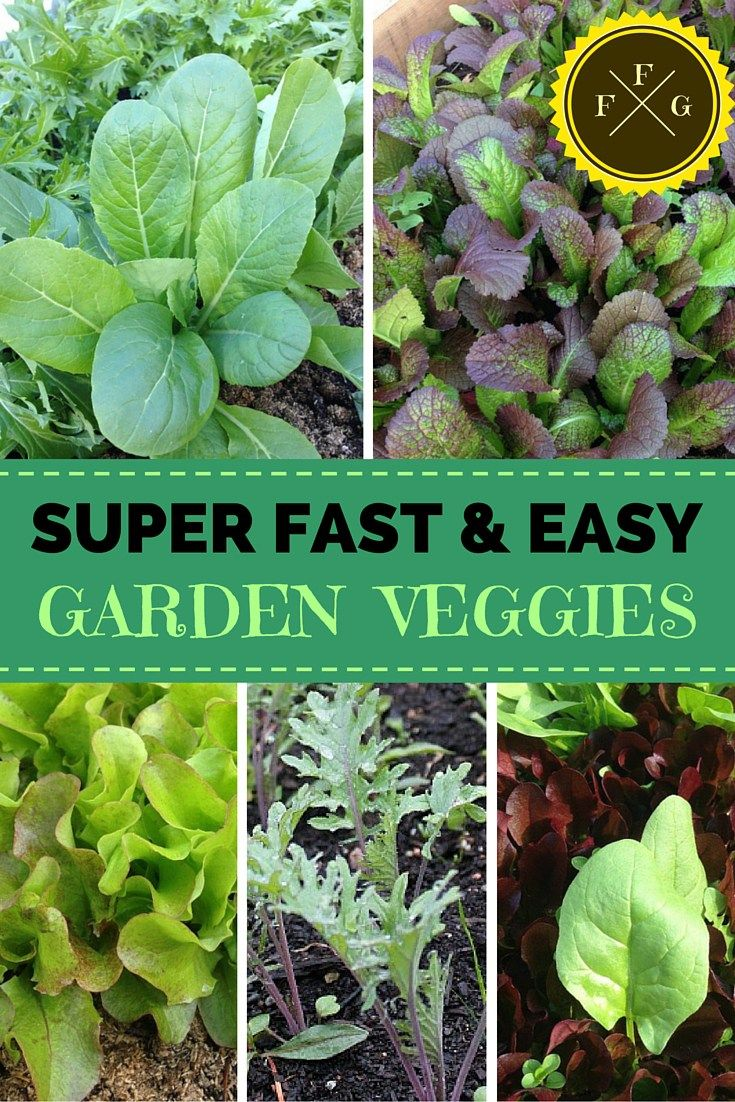 Easy Fast Growing Vegetables For Your Garden Growing Vegetables Fast Growing Vegetables Home Grown Vegetables