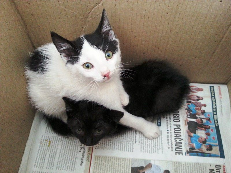 Germany Share Mega Urgent Share To Friends In Germany Mickey And Minnie Two Kittens Abandoned Behind The Door Of Rescuer E With Images Pet Organization Pet Adoption