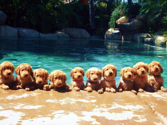 10 puppies in the pool! My favorite is the small one with