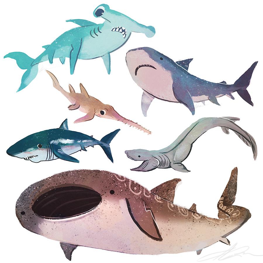 Pin de Becca Stachnik en Ggrjfvuf | Pinterest | Tiburones ...