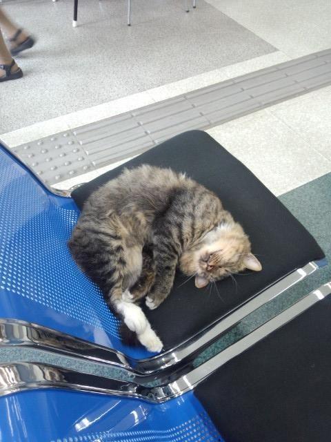 半熟キャンドル@鉛のファニーピンク @hanjyuku_candle 郵便局いったらネコいた(((゚o゚;))聞いたらよう勝手に入ってきて寝てるんだってさ(汗 pic.twitter.com/9W6lpyR9Dw