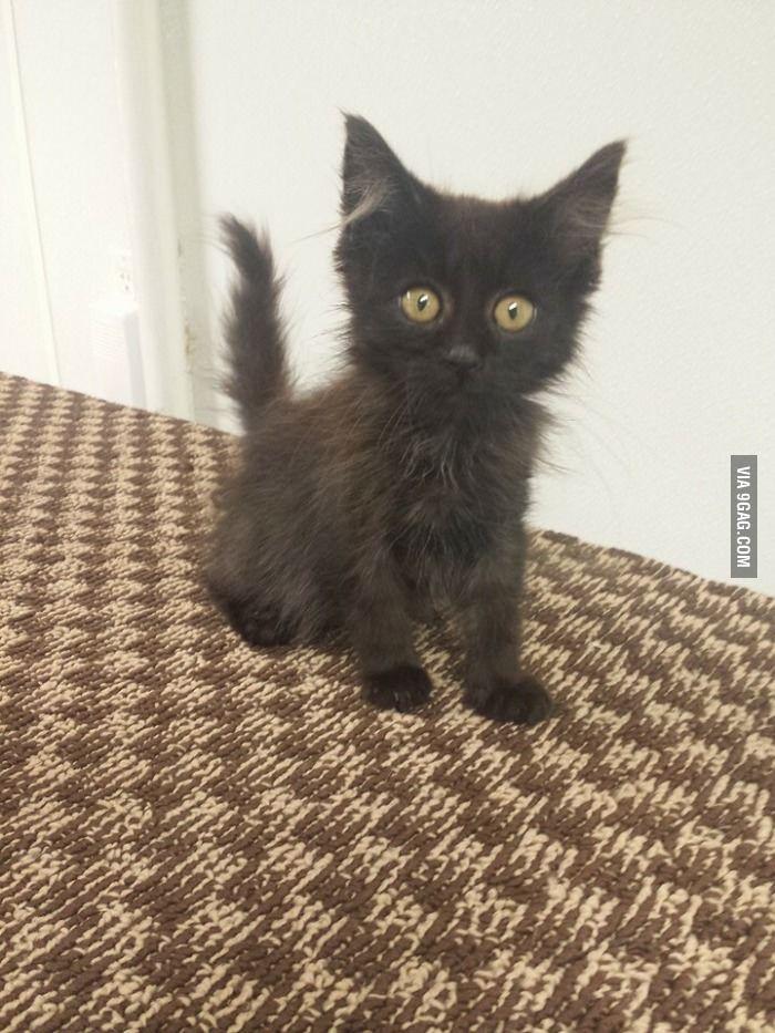 Kitten Was Dumped At My Animal Shelter Last Week Half Dead