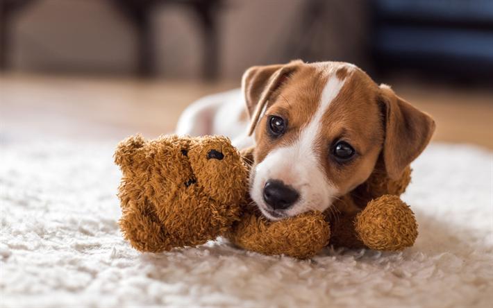 Fondos De Pantalla De Animales Graciosos: Descargar Fondos De Pantalla Beagle, Mascotas, Cachorro