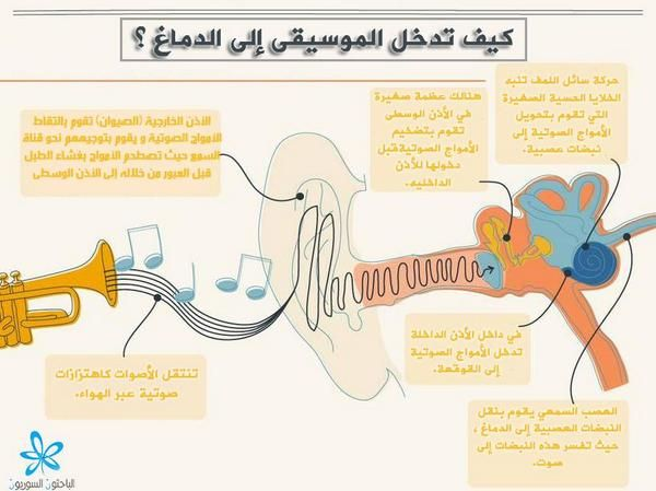 كيف تدخل الموسيقى للدماغ Psychology Music Psychology Student