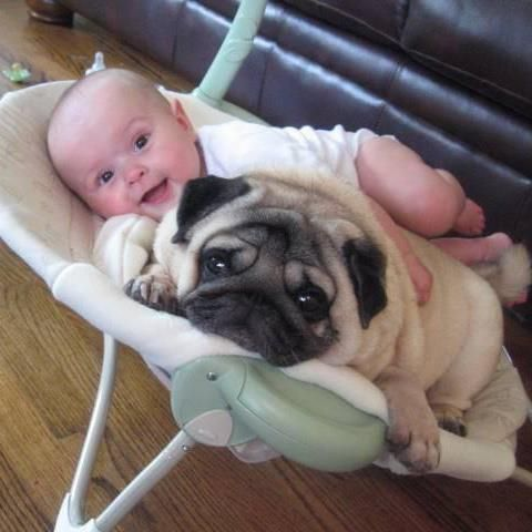 baby and a pug lying in a bouncy chair