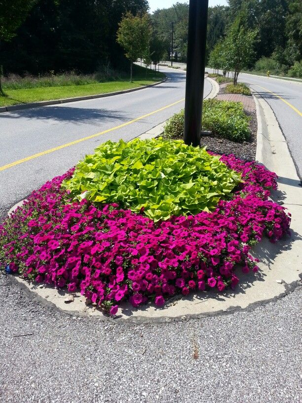 Purple Wave Petunias And Sweet Potatoe Vine Wave Petunias Flower Landscape Purple Flowers Garden