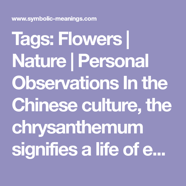 Chrysanthemum Meanings With Images Chrysanthemum Meaning Wild Medicine Meant To Be