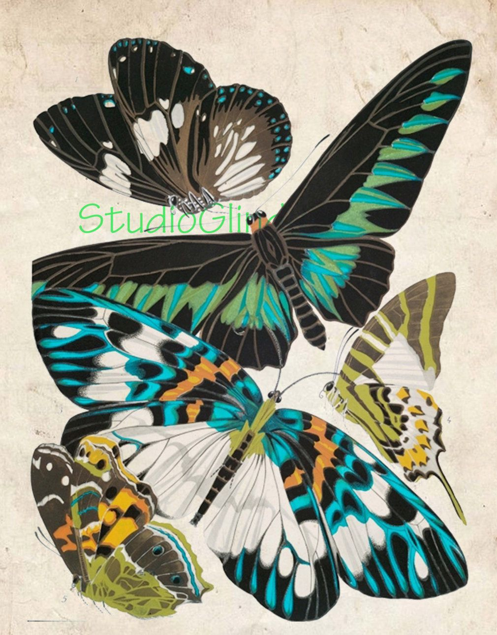 Scrapbook paper examples - Butterfly Print Vintage Butterly Printable 5 Scientific Examples Wall Art Cards Scrapbook Paper Digital Collage Sheet 1a