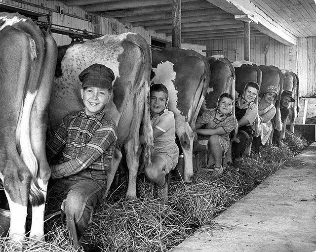 """From the May 24, 1943 photo essay by Alfred Eisenstaedt, """"SPRING ON THE FARM IN PENNSYLVANIA."""" The essay showed the readers of LIFE what spring looked like in Lancaster County, PA in the spring of 1943. According to LIFE, """"the richest farming county east of the Rocky Mountains."""" This image ran with the following caption: """"Five o'clock milking is a family chore on the Aaron H. Weaver farm in East Drumore township, near Quarryville. The Weavers are Mennonites whose Swiss ancestors came to…"""