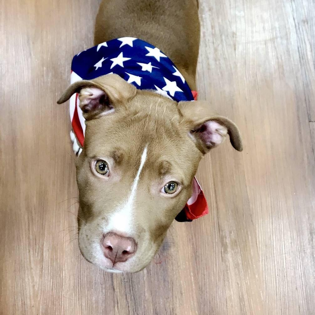 Cutecustomeralert Dakota Visited Pet Valu Mullica Hill Nj To Support The U S War Dogs Association Pet Valu Pets War Dogs Animals