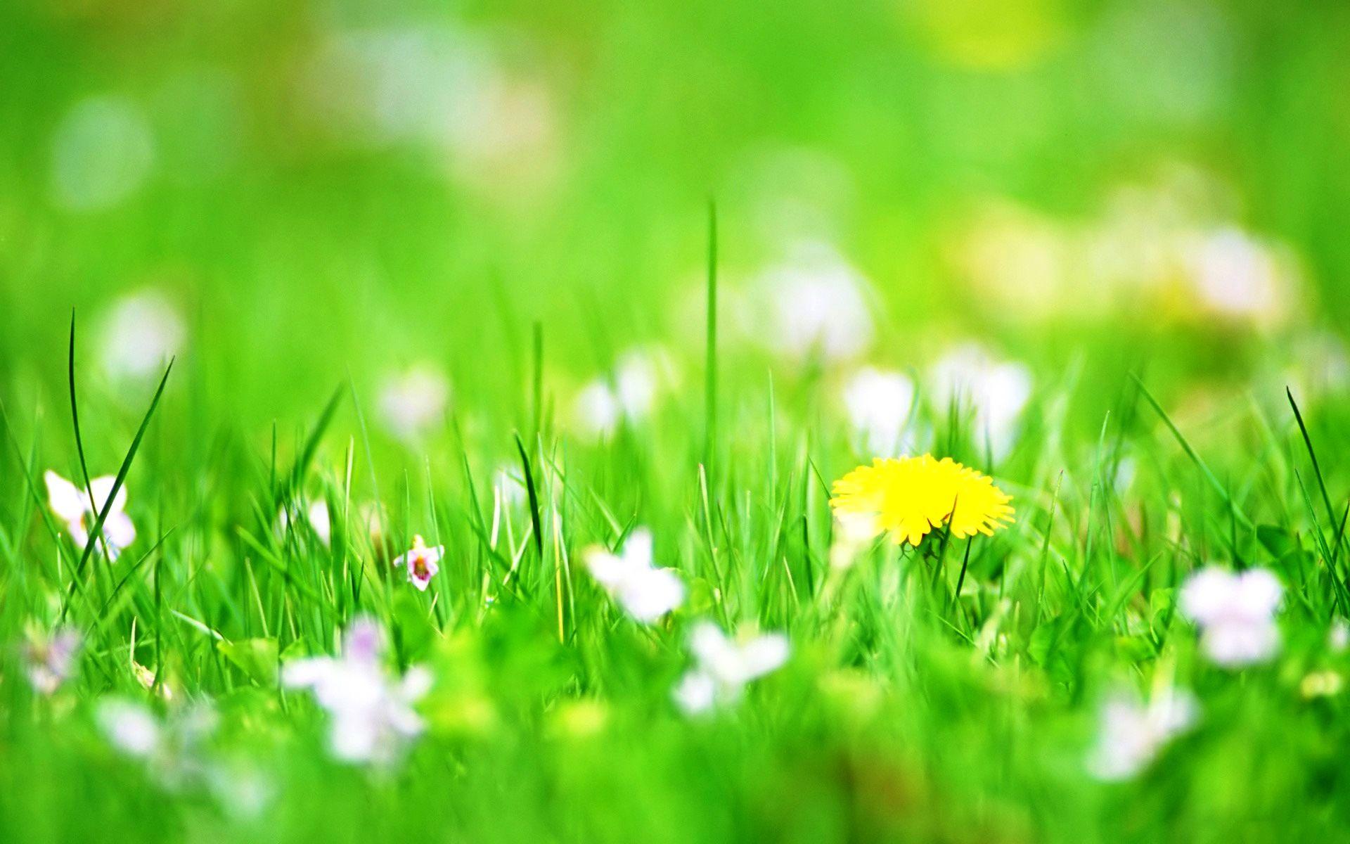 Spring Flowers Backgrounds Desktop Wallpaper 1366215768