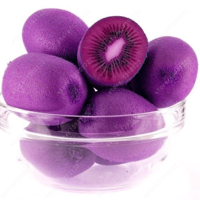 Bonsai seeds by Happy Cellular on Purple Kiwi seeds, Kiwi