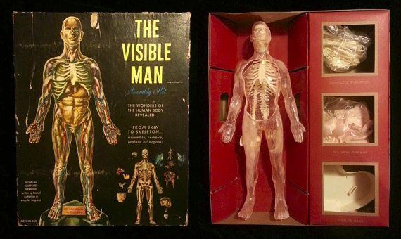 Vintage Visible Man anatomy model | Pinterest | Man anatomy, Anatomy ...