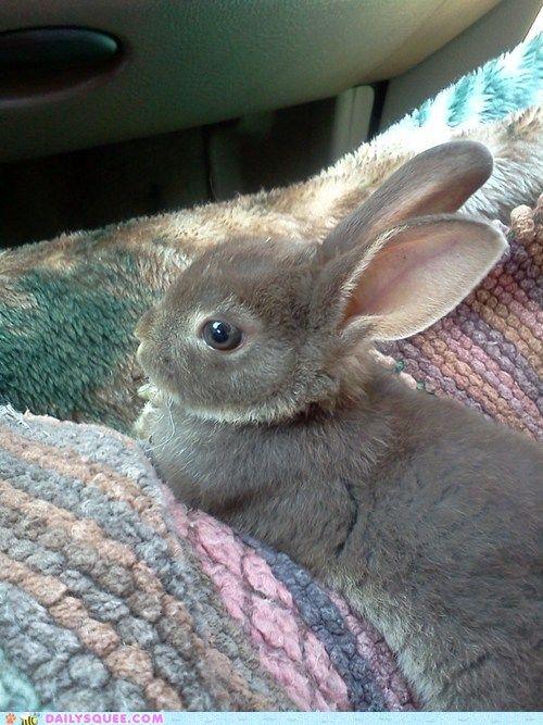 Chill Bunny