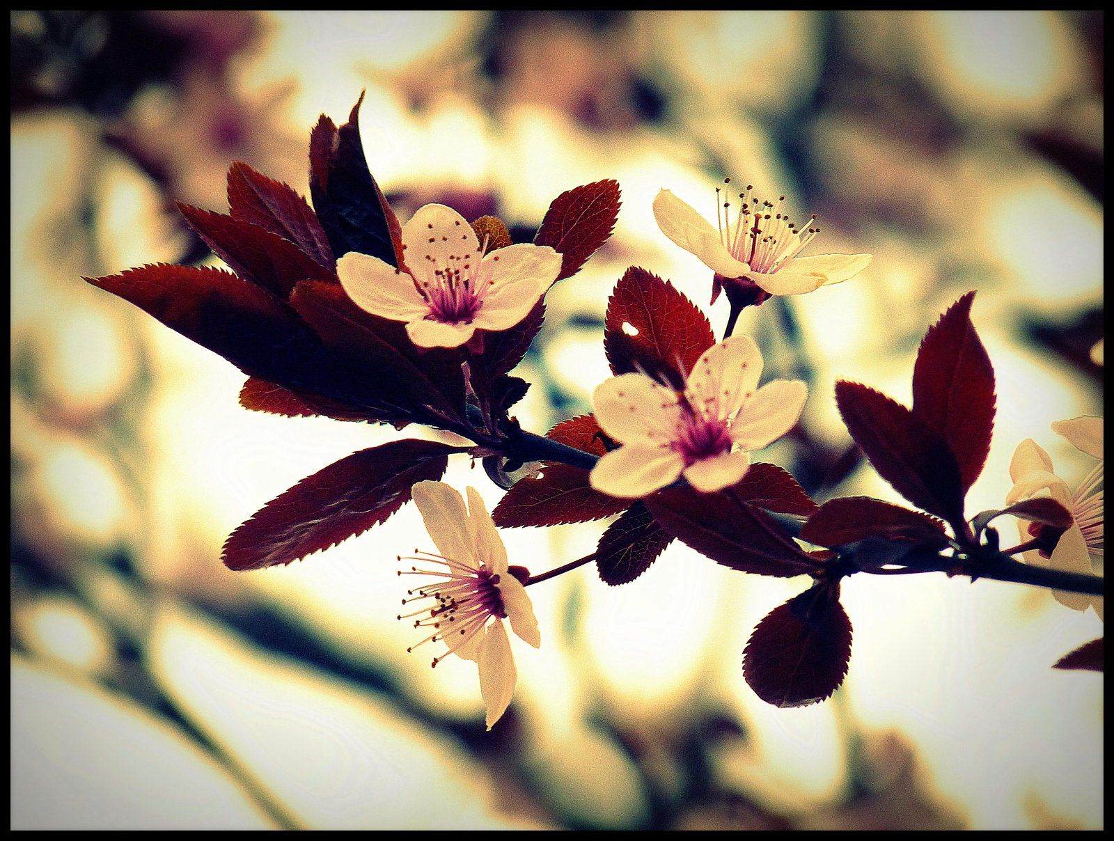 Spring Flowers Tumblr Photography Spring Flowers By Etr Wroclove