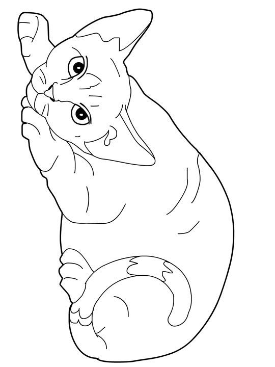 Cat Color Pages Printable Cats Coloring Pages Devon Rex Cats
