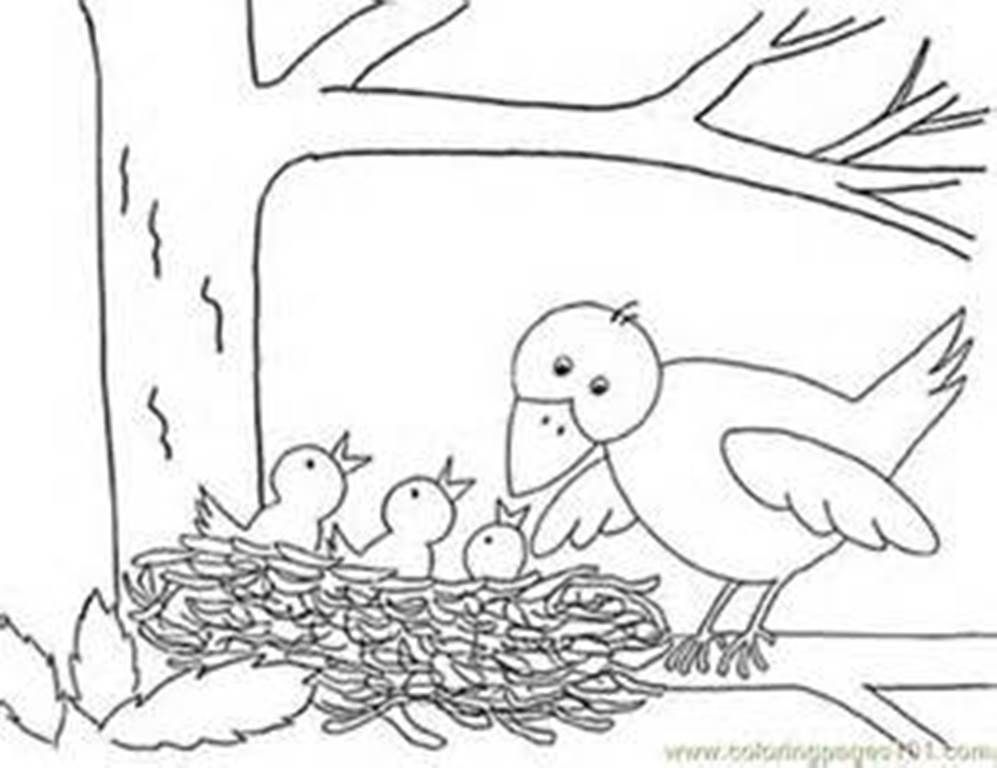 Bird Nest Coloring Picture With Images Bird Coloring Pages