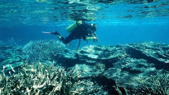 Coral bleaching threat level raised on heritage-listed Great Barrier Reef